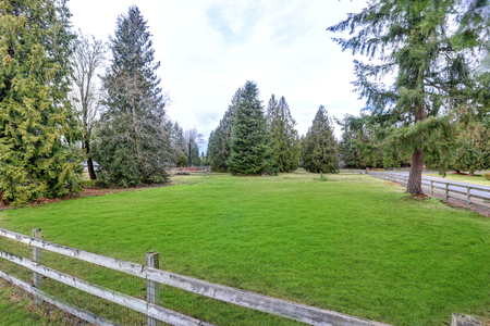Spacious fenced grass filled yard with large fir trees around, equestrian area. Northwest, USA 免版税图像