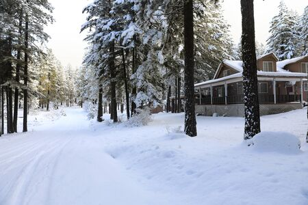 Winterland with pine trees and house exterior in the mountains.