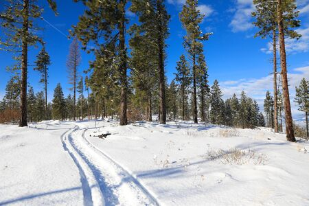 Snow covered mountains during snowmobile ride with blue skies and pine trees. Cle Elum, WA - Seattle area. Banque d'images - 142945055