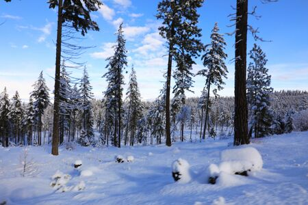 Snow covered mountains during snowmobile ride with blue skies and pine trees. Cle Elum, WA - Seattle area. Banque d'images