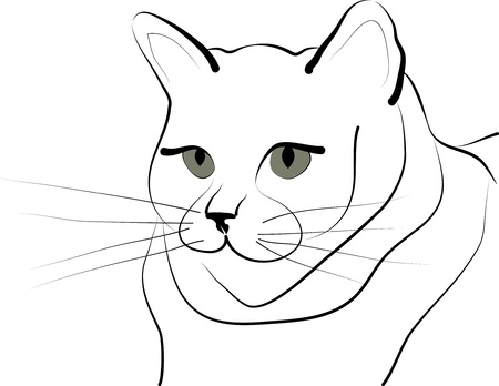 gray eyes: contour image of a cat with gray eyes Illustration