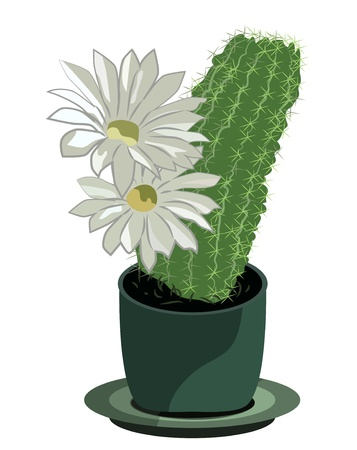 Blooming cactus in a flower pot isolated on white Vector