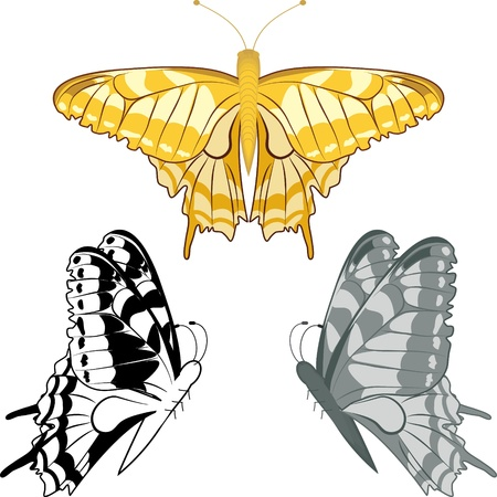 Set of three colorful butterflies one of them gold without gradients and transparencies Vector