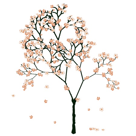 Sakura blooming tree, isolated on white Stock Vector - 17852672