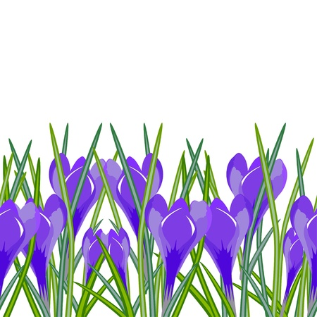 Seamless horizontal background of spring flowers crocuses  Vector illustration