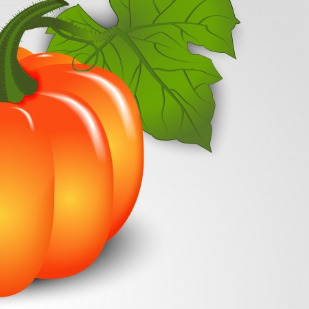 Autumn background. Pumpkin close-up with space for text. Vector illustration. Illustration