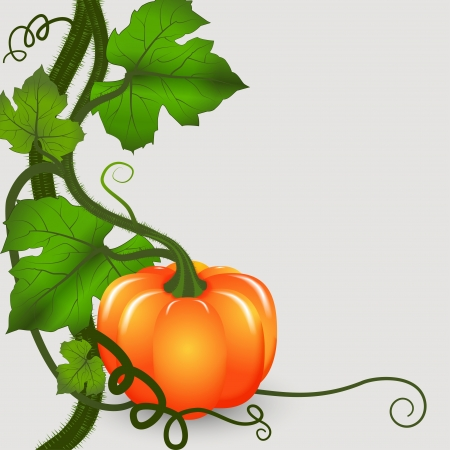 Autumn background. Bush pumpkins with space for text. Vector illustration. Vector