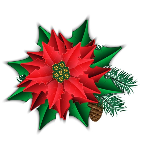 Poinsettia and fir branch with cone isolated on white  Vector illustration  Vector