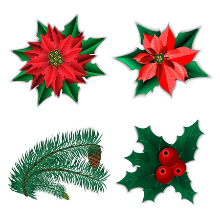 holly berry: Set of Christmas decorations  Christmas flower poinsettia and holly and fir-tree branch with cone isolated on white  Vector illustration  Illustration