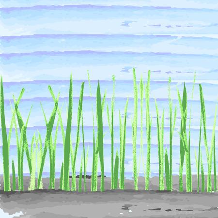 sedge: Hand drawn watercolor grass on blue aquarelle background. Vector illustration.