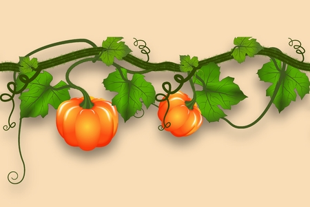 Pumpkin whip with leaves and pumpkins. Realistic seamless border for an autumn design.