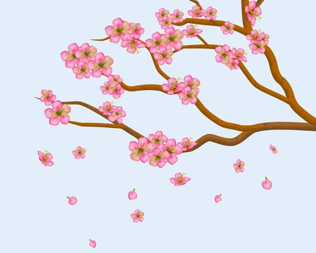 Blooming plum or cherry flowers. Petals of sakura flying down isolated on blue background. Spring Tree branches with realistic pink inflorescences and buds. Vector illustration.