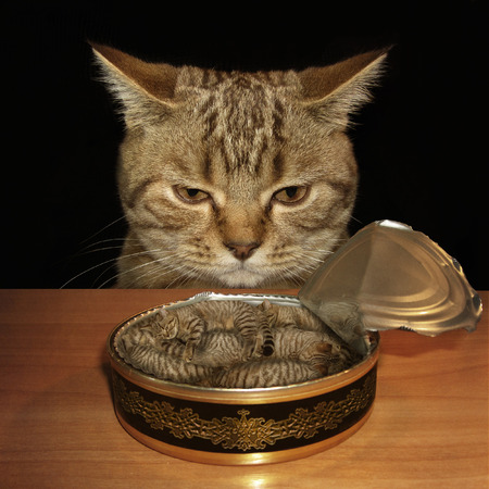A sad cat looks at a tin can. The tin is filled with kittens. Maybe it is a nightmare. Stock Photo