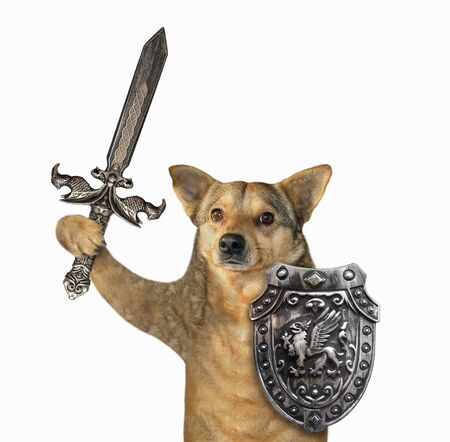 The beige dog viking is armed with a shield with a dragon and an inlaid sword. White background. Isolated.