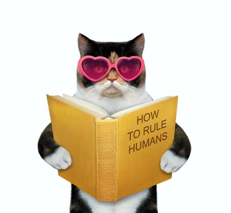 The multicolor cat in pink heart shaped glasses is reading a book called how to rule humans. White background. Isolated. 免版税图像 - 139602302