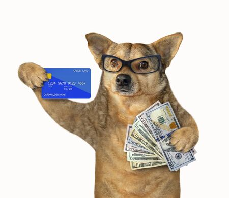 The beige dog in glasses is holding a credit card and a fan of dollars. White background. Isolated.