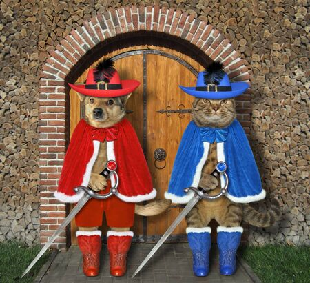The cat with the dog dressed in musketeer clothing with swords are standing at the gate of the old castle. Zdjęcie Seryjne