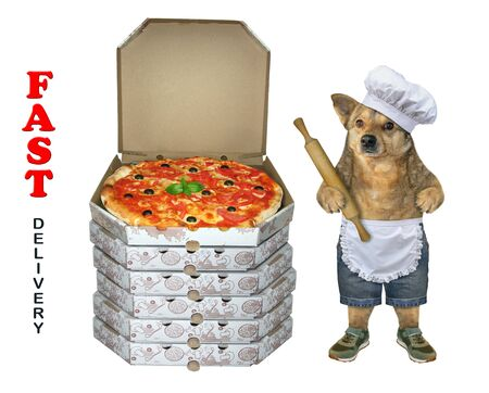 The dog baker in a chef hat and apron with a rolling pin in its paw is standing near a stack of pizza boxes. Fast delivery. White background. Isolated. Stockfoto
