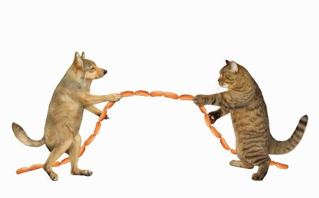 The dog with the cat are playing in tug of war. They pull a sausage instead of a rope. White background. Isolated.