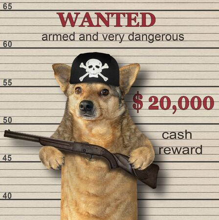 The beige dog gangster in a black bandana holds a fifle. He is wanted. Lineup background.