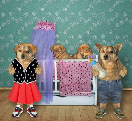 The fashionably dressed beige couple of dogs are standing near a cot with their two puppies in the kids bedroom. 写真素材