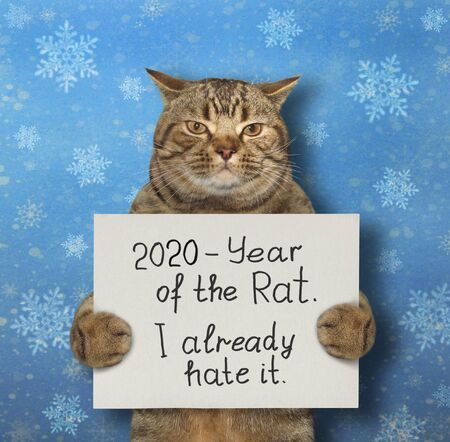 The beige cat is holding a sign that says 2020 - year of the rat and I already hate it. Snow blue background. Isolated.