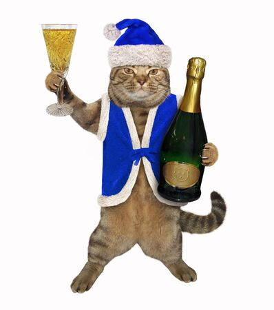 The beige cat in a blue Santa Claus clothing is holding a glass of champagne. White background. Isolated.