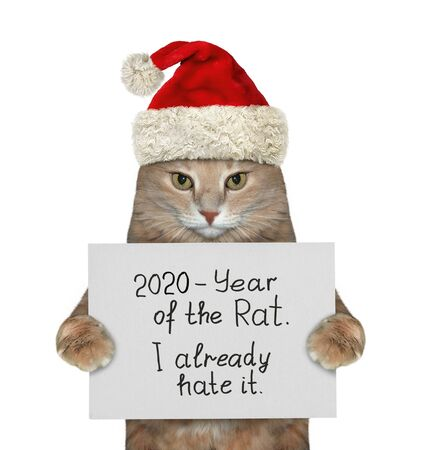 The beige cat in the red Santa Claus hat is holding a sign that says  2020 - year of the rat and I already hate it. White background. Isolated.