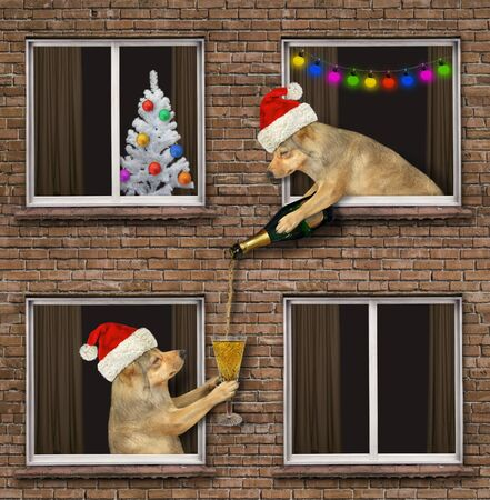 The beige dog in a red Santa Claus hat is leaning out of the window and pouring a glass of champagne to another dog that is its neighbor of the their house on Christmas Day.