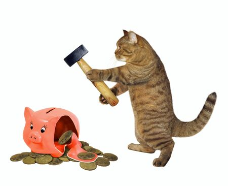 The beige cat with a hammer is near a broken piggy bank with coins. White background. Isolated.