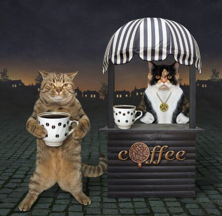 The beige cat buys a cup of coffee at the small food wooden booth in the night street. Reklamní fotografie