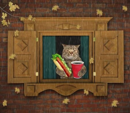 The beige cat with a cup of coffee and hot dog is looking through the wooden window with shutters. The leaves falls. Its raining outside. Autumn mood.