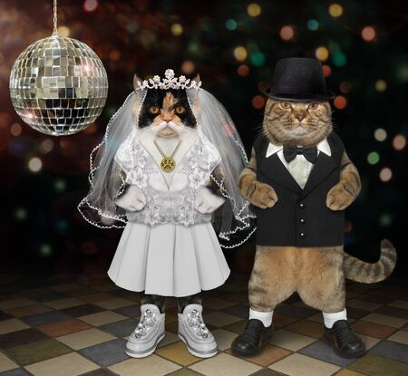 The two cats in love are having fun at the wedding near the mirror ball at the nightclub. They are the newlyweds. The bride in a white dress, the bridegroom in a black suit.