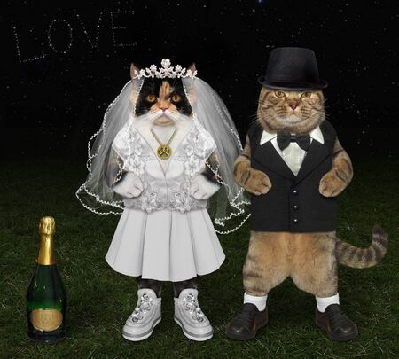 The two cats in love are having fun at the wedding on the meadow at night. They are the newlyweds. The bride in a white dress, the bridegroom in a black suit.
