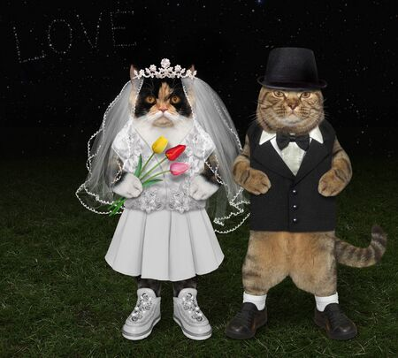 The two cats in love are having fun at the wedding on the meadow at night. They are the newlyweds. The bride in a white dress with flowers, the bridegroom in a black suit. 免版税图像