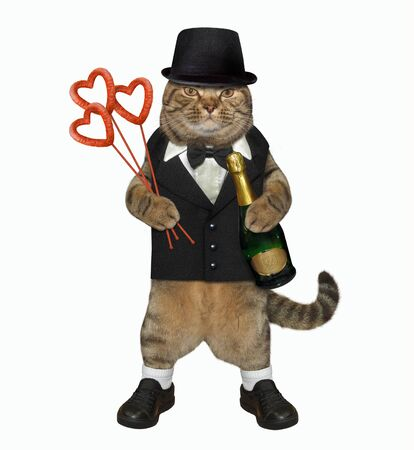 The fashionably dressed cat with a bottle of champagne and a bouquet from heart shaped sausages looks like a real gentleman. White background. Isolated. Standard-Bild