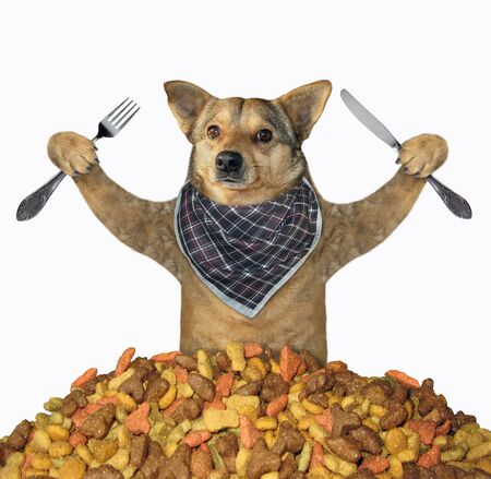 The dog in a neck napkin with a knife and a fork sits in front of the a pile of dry food. White background. Isolated.