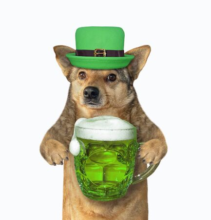 The dog in green hat with a mug of beer celebrates St. Patricks Day. White background. Isolated. 版權商用圖片