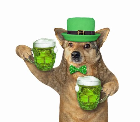 The dog in a green hat with two mugs of beer celebrates St. Patricks Day. White background. Isolated. 版權商用圖片