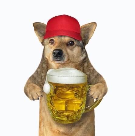 The dog in a red cap is holding a mug of beer. White background. Isolated. 版權商用圖片 - 142087630