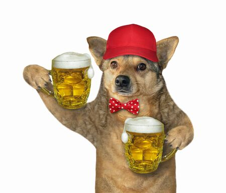 The dog in a red cap and a bow tie is holding two mugs of beer. White background. Isolated.