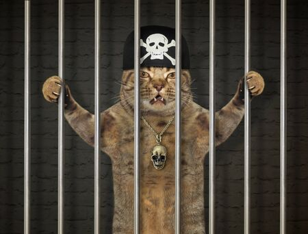 The cat criminal in a bandana is behind bars in the prison.