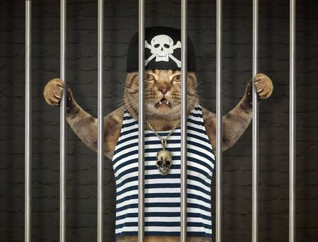 The cat pirate in a bandana and a striped sailor shirt is behind bars in the prison.