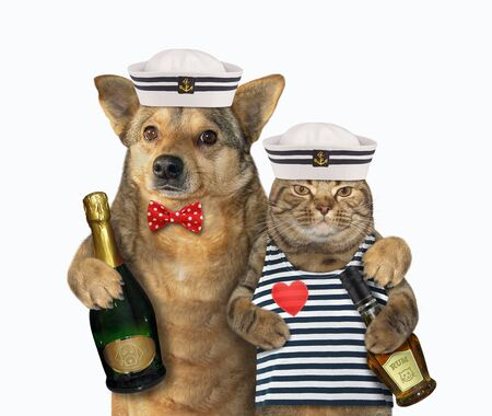 The dog mariner with champagne is hugging the cat in a sailors clothes with a bottle of rum. White background. Isolated. Stockfoto
