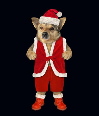 The dog is dressed in Santa Claus clothes. Black background. Isolated. Stock Photo