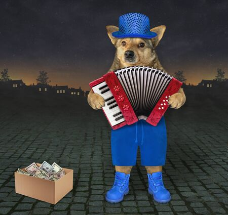 The dog in blue hat, shorts and boots is playing the accordion on the street at night. The box of earned money in next to him.
