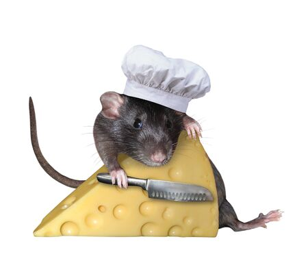The pet rat in a cook hat with a chefs knife is hugging a big piece of cheese with holes. White background. Isolated. 版權商用圖片