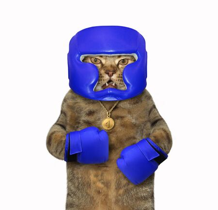 The cat boxer is dressed in a boxing blue helmet and gloves. White background. Isolated.