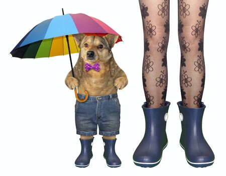 The girl in stockings and her dog in a bow tie, shorts with a color umbrella are wearing blue rubber boots. White background. Isolated.