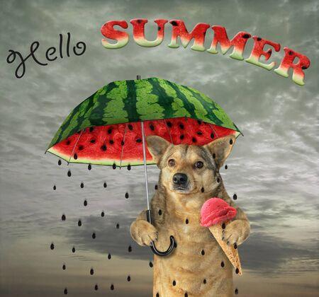 The dog under a watermelon umbrella is eating an umbrella fruit ice cream. Hello summer. Imagens